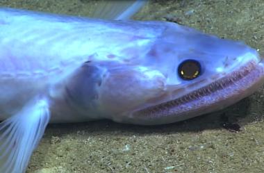 Vídeo mostra criaturas bizarras habitantes das profundezas dos oceanos nunca antes vistas.