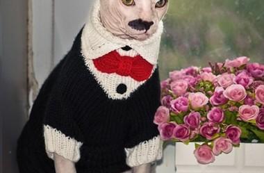 Conheça Portos: O gato com a aparência e personalidade que lembram Adolf Hitler.