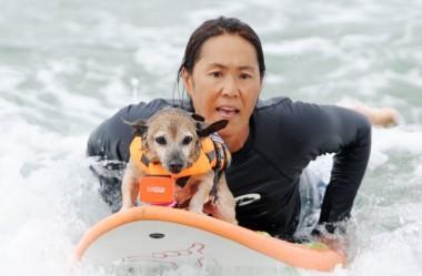 Cachorros no surfe: Agora eles também participam dos campeonatos nos EUA.