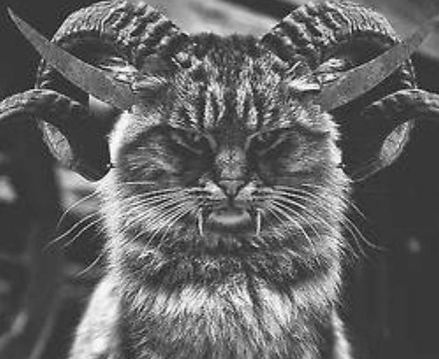 Gatos_Demoniacos04