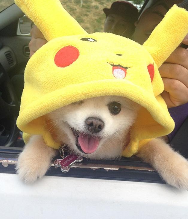 pokemon-go4