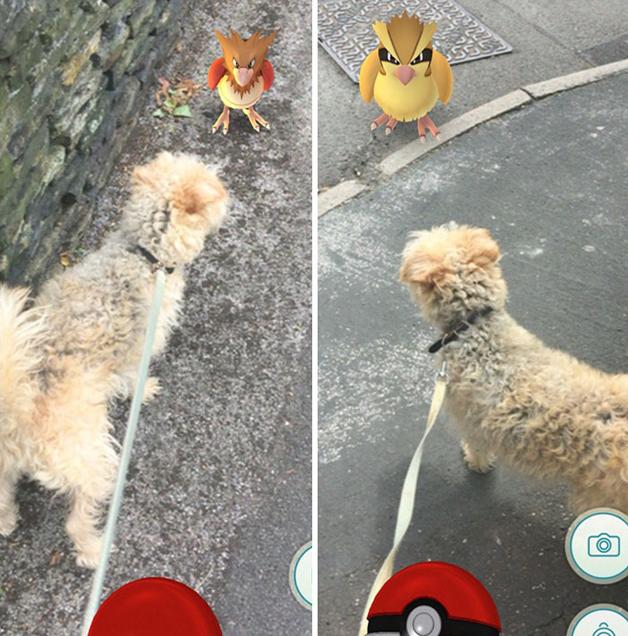 pokemon-go6