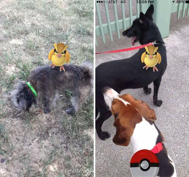 pokemon-go9