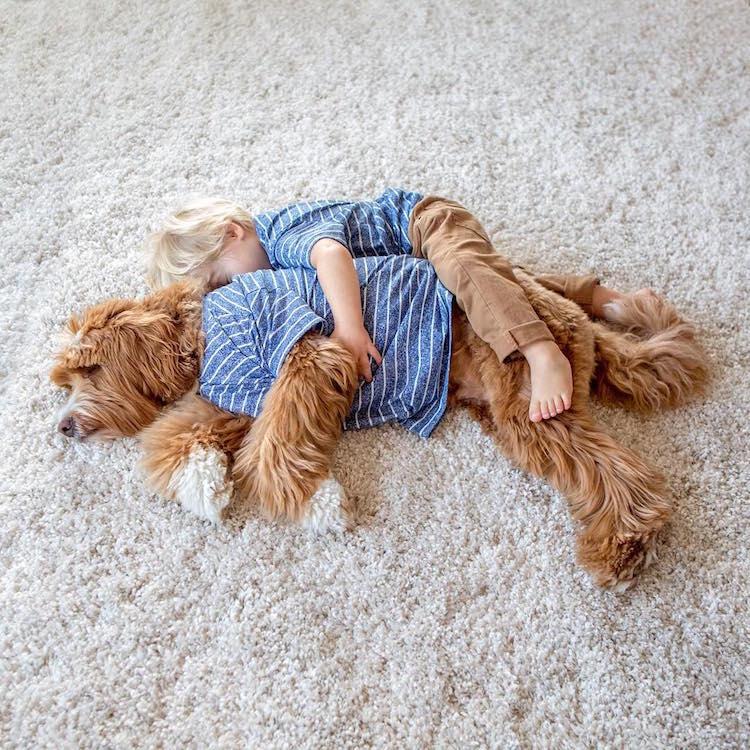 cachorroamigo_muitabrisa9